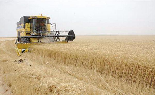 حصاد القمح في فرنسا