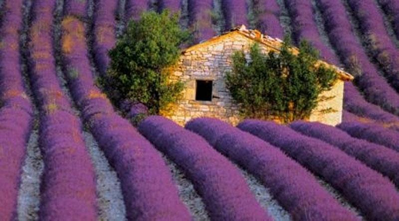 الزراعة في فرنسا...والمشكلات التي تهددها