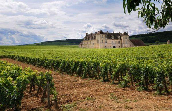زراعة العنب منتشرة في فرنسا