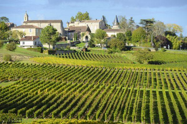 مزارع العنب في فرنسا