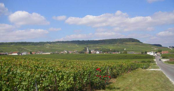 مشكلات تواجه الزراعة في فرنسا