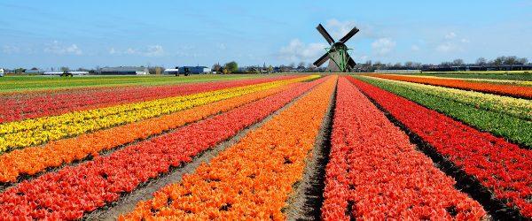 الإقامةفي هولندا 5 سنوات من شروط الجنسية الهولندية