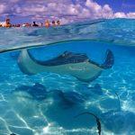 جزر الكايمان سياحة وأهم معالمها السياحية