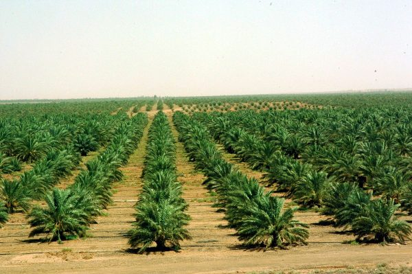 الزراعة فى كاليدونيا الجديدة