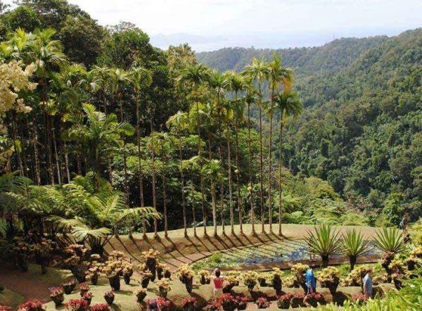 حدائق بالاتا النباتية