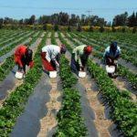 الاستثمار الزراعي في البانيا ..  تعرف على مميزاته