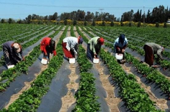 الاستثمار الزراعي في البانيا
