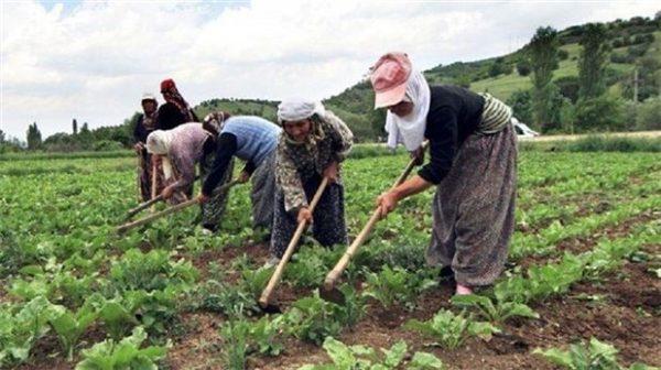 الاستثمار الزراعي في بلغاريا