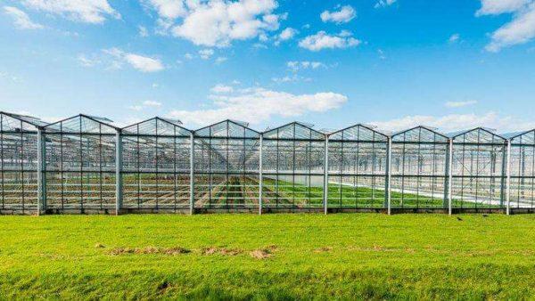 قطاع الزراعة فى صربيا