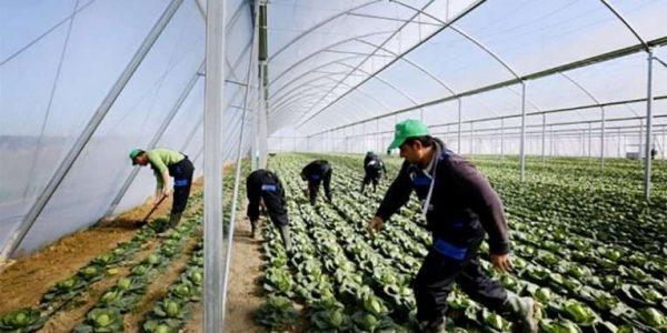 مميزات الأستثمار الزراعى فى ألبانيا