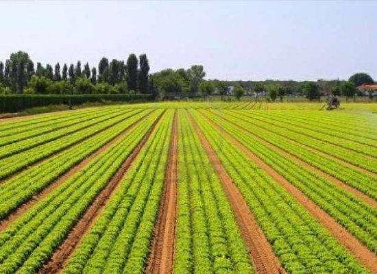 الإنتاج الزراعى فى صربيا