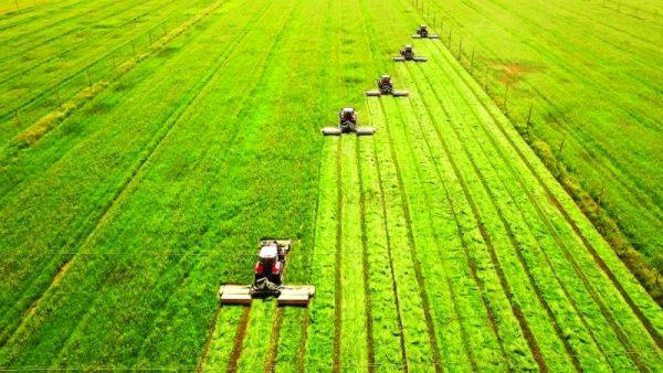 الاستثمار الزراعي في رومانيا