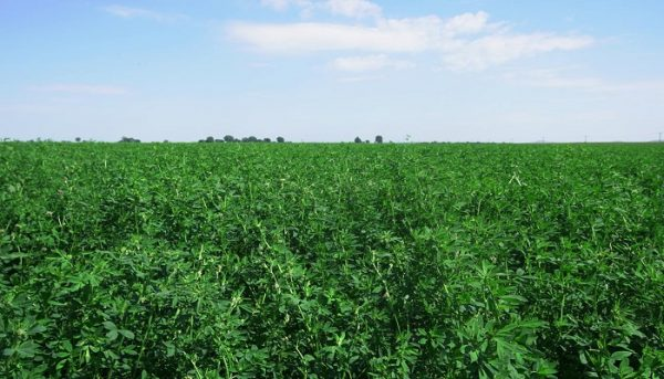 قطاع الزراعة فى رومانيا