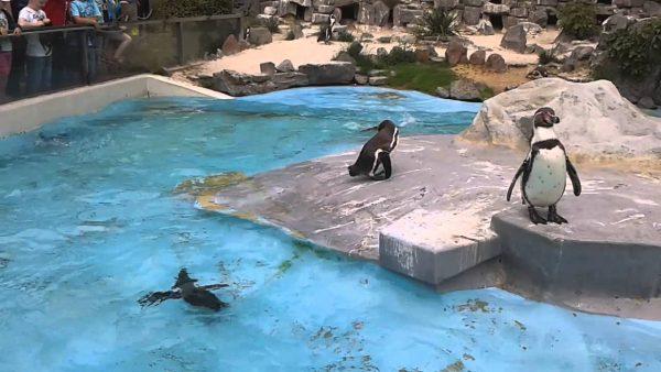 حديقة حيوان كولون