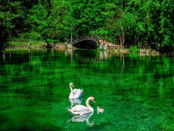 أهم الأنشطة فى نهر البوسنة