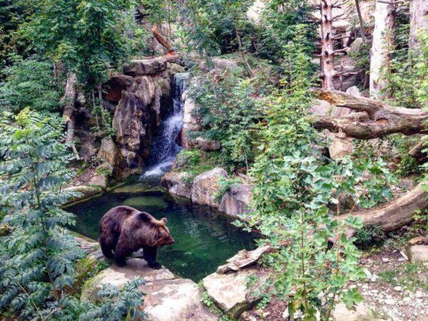 حديقة حيوانات الألب