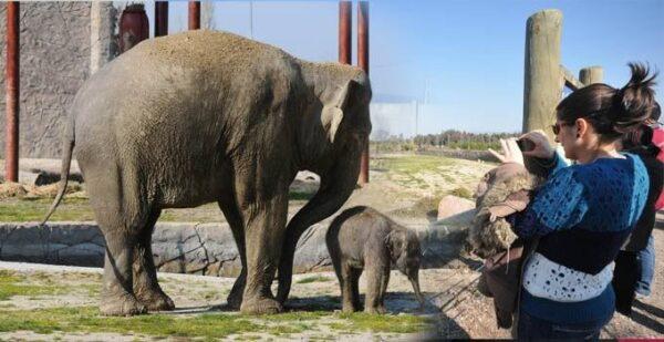 حديقة حيوانات أزمير