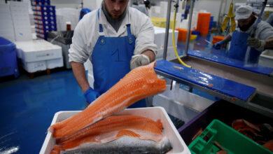 Photo of استيراد سمك السلمون النرويجي