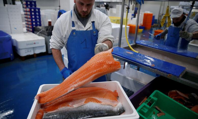 استيراد سمك السلمون النرويجي