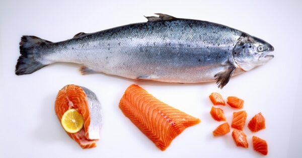 فوائد سمك السلمون النرويجى