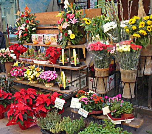 محلات بيع الورد الطبيعي فى هولندا