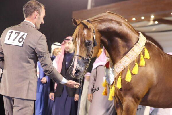 أشهر الخيول العربية فى بولندا