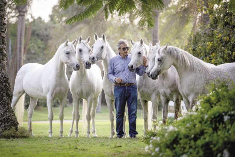 استيراد خيول من اوروبا