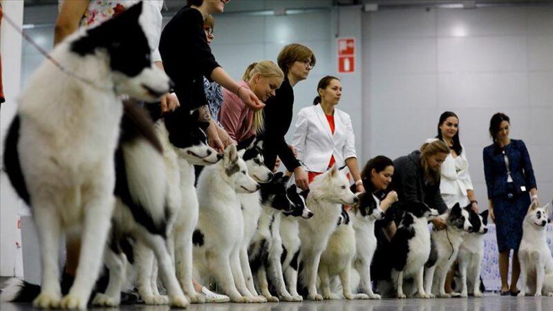 استيراد كلاب من روسيا