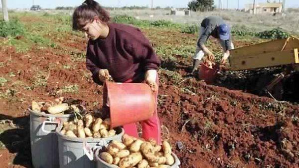 الحياة والعمل في قبرص